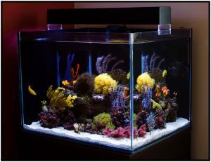 цены на аквариумы